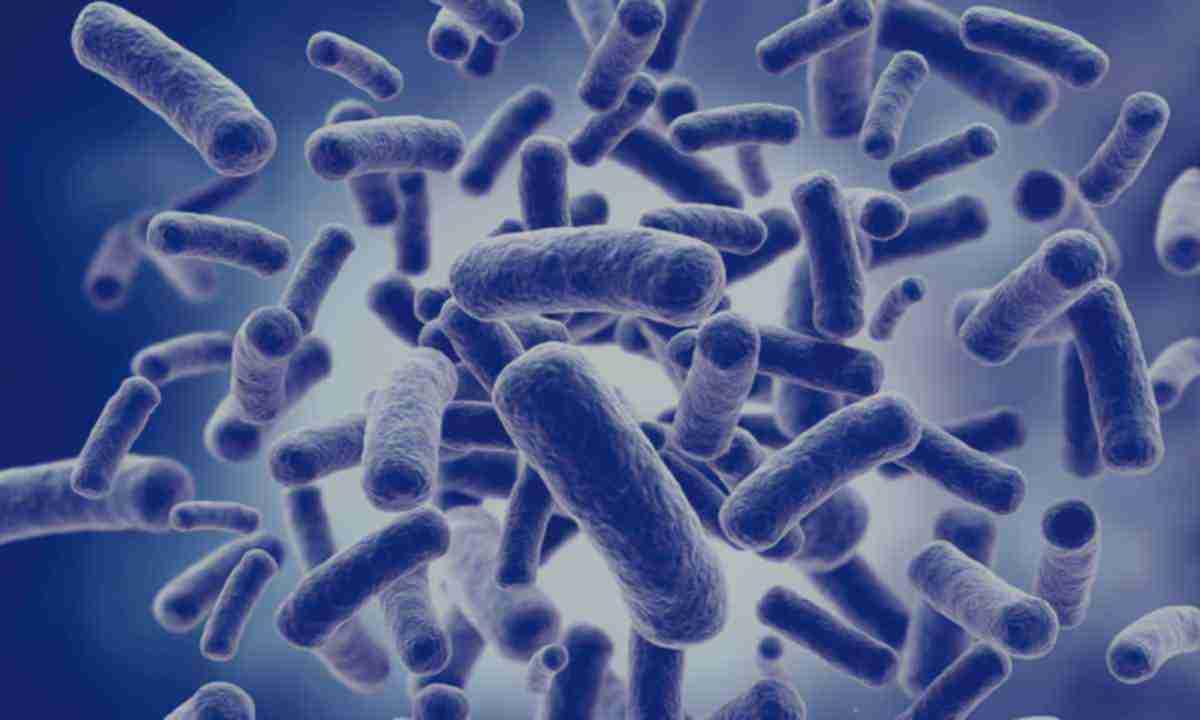 Термофільні бактерії: користь і шкода для людини